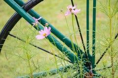 Rosa blommor Royaltyfria Foton