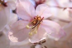 Rosa blommor Arkivbild