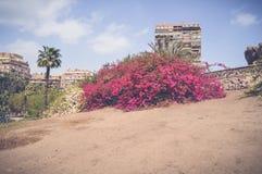 Rosa blommor Royaltyfri Foto