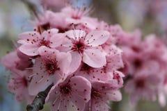 Rosa blommor Arkivfoto