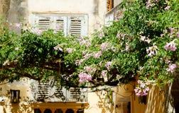 Rosa blommor av Tropea Arkivfoton