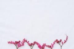 Rosa blommor för knoppning för korallvinranka Royaltyfria Foton