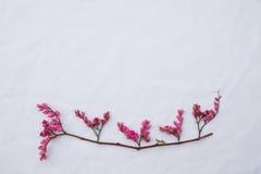 Rosa blommor för knoppning för korallvinranka med bruna filialer Royaltyfri Foto
