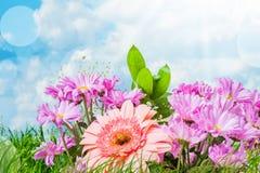 Sommarrosa färgblommor Arkivfoto