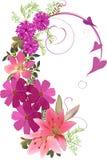 Rosa blommor krullad design som isoleras på vit Arkivbild
