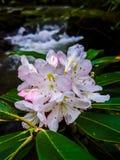 Rosa blommor och vitt vatten royaltyfri foto