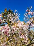 Rosa blomningar arkivbild