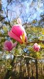 Rosa blomningar Royaltyfria Foton