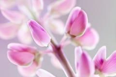 Rosa blomstra blomma - abstrakt begrepp Arkivbild
