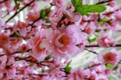 Rosa Blüte Lizenzfreie Stockfotografie