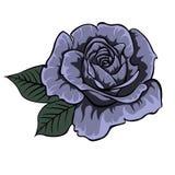 Rosa blu Isolato è aumentato Singola Rosa Fotografie Stock Libere da Diritti