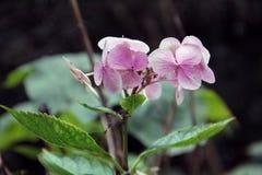 Rosa Blume Stockbild