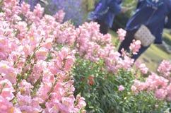 Rosa Blume lizenzfreies stockbild