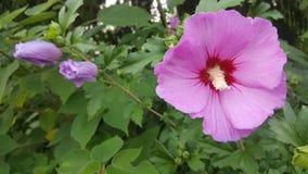 Rosa Blume Stockfoto