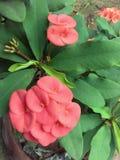 Rosa Blume auf Baum Stockfoto