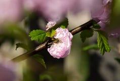 Rosa Blume auf dem branche Stockfotografie
