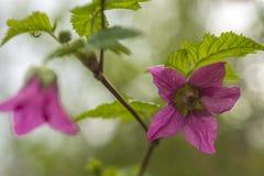 Rosa Blume auf einer grünen Niederlassung Lizenzfreies Stockbild