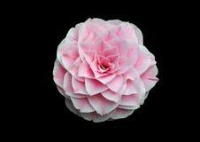Rosa Blume auf schwarzem Hintergrund Stockfotografie