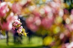 Rosa Blume der Abstraktion Stockfotografie