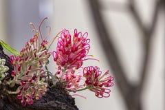 Rosa Blume exotisch auf Baumstamm lizenzfreies stockfoto