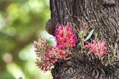Rosa Blume exotisch auf Baumstamm lizenzfreie stockfotos