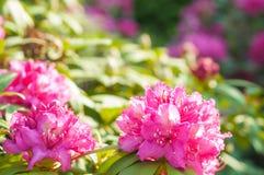- rosa Blume - Grünblätter lizenzfreie stockbilder