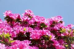 - rosa Blume - Grünblätter Stockfotos
