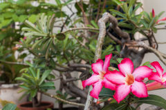 - rosa Blume - Grünblätter Lizenzfreie Stockfotos