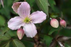 Rosa Blume am grünen Hintergrund lizenzfreies stockfoto