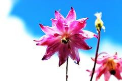 Rosa Blume hoch auf die Oberseite Lizenzfreie Stockfotos