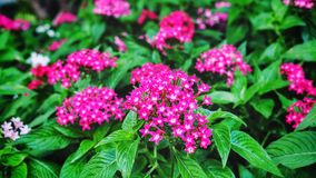 Rosa Blume im Garten stockfoto