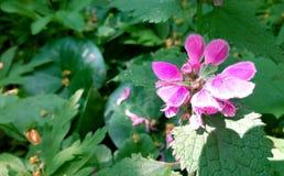 Rosa Blume im Sun Stockbilder