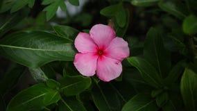 Rosa Blume, langes gr?nes Blatt lizenzfreie stockfotografie