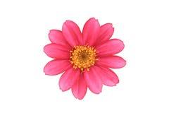 Rosa Blume lokalisiert Lizenzfreies Stockfoto