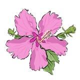 Rosa Blume mit den Knospen vektor abbildung