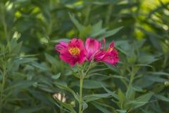 Rosa Blume mit grünem Vegetationshintergrund lizenzfreie stockbilder