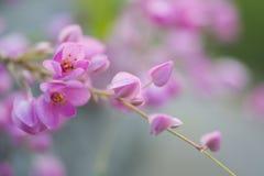 Rosa Blume mit Weichzeichnung Stockfotos