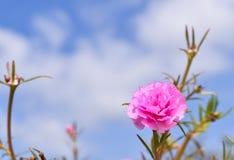 Rosa Blume und blauer Himmel Lizenzfreie Stockfotografie