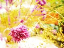 Rosa Blume unter Gras und Reis Lizenzfreie Stockfotos