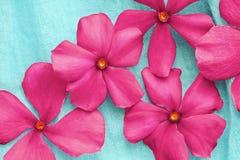 Rosa Blumen über Blau Stockfoto