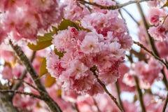 Rosa Blumen lizenzfreie stockfotos
