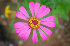 Rosa Blumen stockbild
