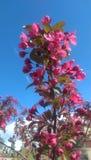 Rosa Blumen Stockfotografie