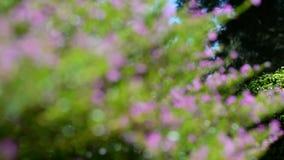 Rosa Blumen stock video