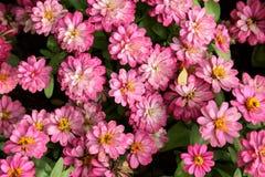 Rosa Blumen Stockfoto