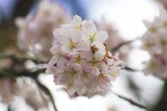 Rosa Blumen Stockbilder