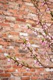 Rosa Blumen Lizenzfreies Stockbild