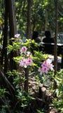 Rosa Blumen-Anlage in einem Park Stockbilder