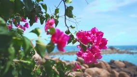 Rosa Blumen-Ansicht-Himmel-Natur-Thailand-Insel Asien stock video