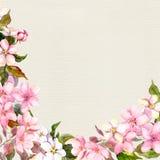 Rosa Blumen - Apfel, Kirschblüte Von der Blumenfeldserie Weinleseaquarell auf Papierhintergrund Lizenzfreies Stockbild
